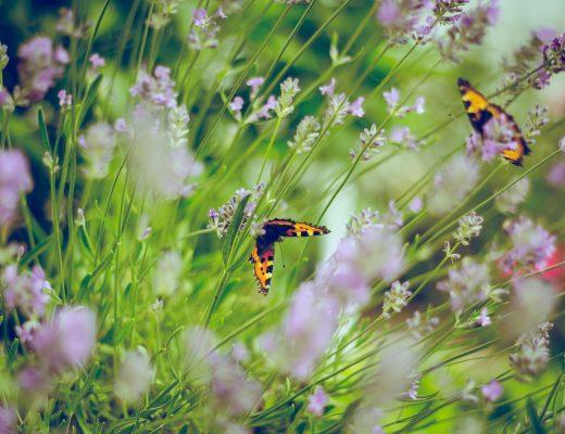 A garden of flowers and butterflies.